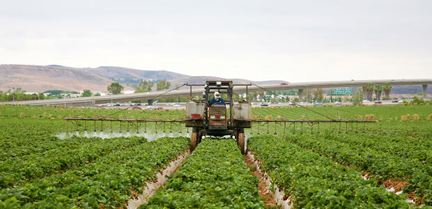 California Bans Chlorpyrifos After Concerns for Children's Health