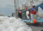 Workers recover oil-filled boom for decontamination as part of the response effort to the Gulf of Mexico oil disaster.