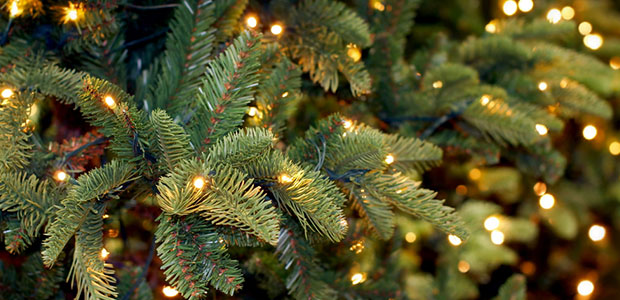 A Top Holiday Hazard: Your Christmas Tree