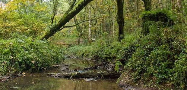 The Tryon Creek Natural Area is one of the participating employers this year.