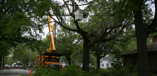 A high number of tree trimming and clearing fatalities in OSHA