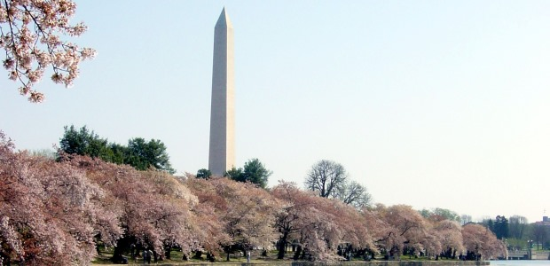 "FAA on March 18 released a new video reminding visitors that the National Cherry Blossom Festival is a ""no drone zone."" There is a ban in effect against flying any type of unmanned aircraft without specific approval in the District of Columbia and cities and towns within a 15-mile radius of Ronald Reagan Washington National Airport."