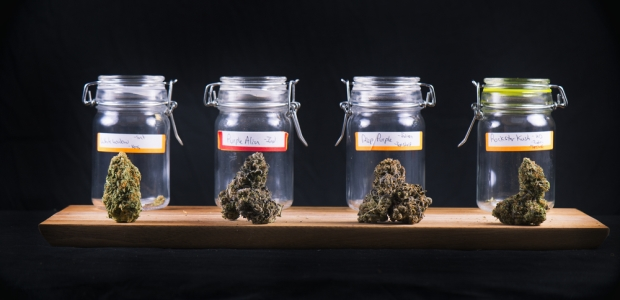 One-time use of marijuana is rarely detected in a urinalysis. The detection window must be very precise for this to occur.